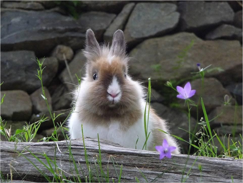 tamara gianola- un coniglio per amico